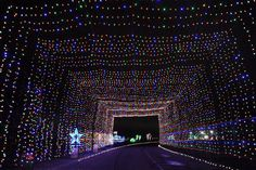 TEXAS MOTOR SPEEDWAY GIFT OF LIGHTS -- Usually, the driving at Texas Motor Speedway is a heck of a lot faster, but folks take it easy during the holiday season. This attraction features 2 million LED lights in 600 holiday displays that you can drive through. If you purchase your ticket online, you can get admission to the Express Lane entrance for less of a wait. Nov. 26 through Jan. 1 at TMS in Fort Worth, giftoflightstms.com.
