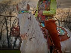 Beautiful horse & tack Also love the wavey mane