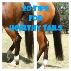 20 Tips for Healthy Horse Tails