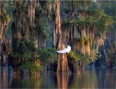 Atchafalaya - a magical and dangerous swamp near Lafayette, Louisiana