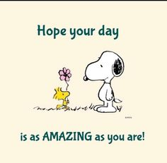 Charlie Brown with Snoopy. Charlie Brown Quotes, Charlie Brown And Snoopy, Happy Birthday Charlie Brown, Peanuts Cartoon, Peanuts Snoopy, Snoopy Hug, Phrase Cute, Peanuts Quotes, Snoopy Quotes Love