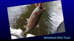 Ashtabula , Ohio Trout Live on Periscope