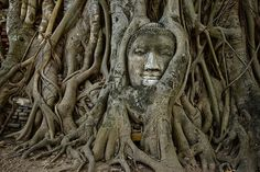Wat Phra Mahathat, Ayutthaya, is renowned for the decapitated head of Buddha cradled by the roots of a tree. Cool! iexplore.com
