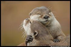 Otter love <3