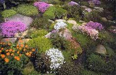 Steingarten - verschiedene Garten - Gartenblumen