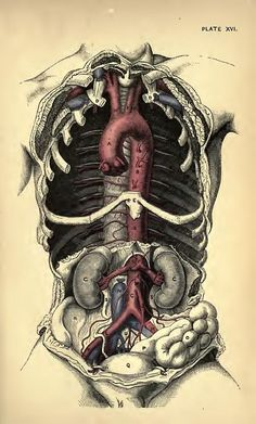 Plate XVI. Practical Anatomy: a manual of dissections (1888 https://www.pinterest.com/pin/287386019949555106). By Heath, Christopher; Godlee, Rickman John, Sir.