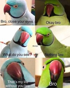 18 Animal Memes That Are Funny Feathered Fr.- 18 Animal Memes That Are Funny Feathered Fr… – 18 Animal Memes That Are Funny Feathered Friends 500 X 628 An – Really Funny Memes, Crazy Funny Memes, Funny Animal Memes, Stupid Memes, Cute Funny Animals, Funny Relatable Memes, Funny Animal Pictures, Funny Jokes, Hilarious Quotes