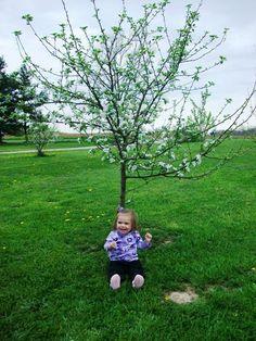 Violet under a tree in bloom via @stacygirly c. 2010 | #starkbros customer photo
