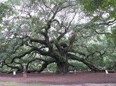Resultado de imagen para painting of oak