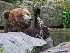 Zoo Děčín - jedna z nejkrásnějších zoologických zahrad u nás Zoo, Brown Bear, Animals, Animales, Animaux, Animal, Animais