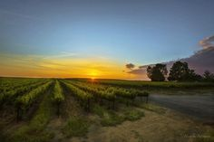 If you see any clouds out here today in Wine Country snap a pic...quick! Surely within minutes the sun will burn them into a mere memory. Good morning from Wine Country!#AmazingPhotoHunter #bns_sunrise #Colors_of_day #country_features #destinationearth #escaype #ebs_fullframe #explorehisearth #everything_imaginable #fotocatchers #great_captures_nature #heart_imprint #igmasters #ig_countryside #jr_loveearth  #love_natura #main_vision #master_shots #nature_up_close #natureaddictsun…
