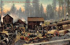 Postcard Lumber Mill Cutting Up Giant Redwood Trees in California~107990