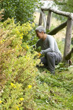 Manutenzione del giardino dell'apiario sperimentale di Marentino http://www.coopagridea.org/giardini-api-e-mieli-a-marentino/