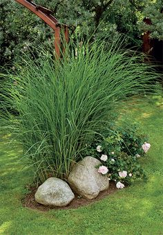 This with hosta instead of the flowers and lower grass for right side of shed landscape Garden Pool, Garden Beds, Ornamental Grasses For Shade, Landscape Design, Garden Design, Garden Archway, Shed Landscaping, Shade Grass, Front Gardens