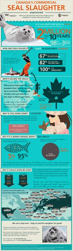Canada's Commercial Seal Slaughter Explained [Infographic]