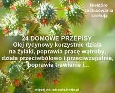 zdrowie.hotto.pl-olej-rycynowy-wlasciwosci-zastosowanie-na-co-dziala-przepisy