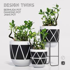 Designtwins pot one bush design designtwins, available in MAX, OBJ, FBX, ready for animation and other projects Painted Plant Pots, Painted Flower Pots, Concrete Planters, Diy Planters, Flower Pot Design, Pottery Painting Designs, Pot Jardin, Cement Crafts, Terracotta Pots
