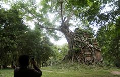 """A tourist visits Sambor Prei Kuk, or """"the temple in the richness of the forest"""" an archaeological site of ancient Ishanapura, is seen after being listed as a UNESCO world heritage site, in Kampong Thom province, Cambodia, on July 15, 2017."""