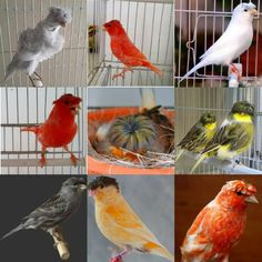 Pretty Birds, Love Birds, Beautiful Birds, Cute Baby Animals, Animals And Pets, Zebra Finch, Canary Birds, Extinct Animals, Animal Photography