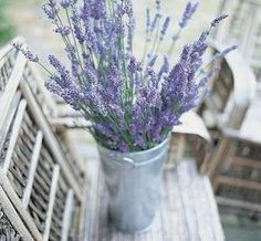 Lavender so inexpensive