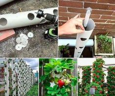 Strawberry or tomato tube Aquaponics 4 You