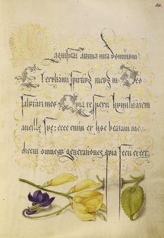 Mira-calligraphiae-monumenta-05