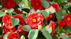 Japan Flower Stock Footage Video - Shutterstock