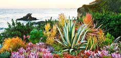 Seaside succulents