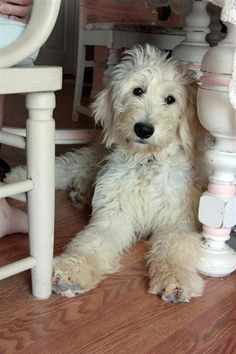 Every farm house needs a ragamuffin pooch under the kitchen table to warm our feet.