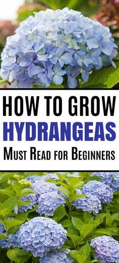 Hydrangea Landscaping, Backyard Landscaping, Landscaping Ideas, Farmhouse Landscaping, Backyard Designs, Hydrangea Shrub, Hydrangea Care, Growing Hydrangea, Caring For Hydrangeas