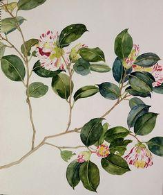 Camellia-Chisako Fukuyama,  Watercolor  http://chisako-fukuyama.jimdo.com/works/water-color/