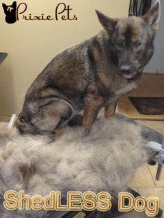 Dog Grooming Tips - How to Make Your Dog Shed Less - Tools, Techniques, Brushes, Shampoos, How To Step by step
