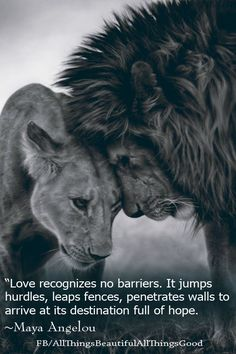 """Love recognizes no barriers. It jumps hurdles, leaps fences, penetrates walls to arrive at its destination full of hope."" ~Maya Angelou https://www.facebook.com/AllThingsBeautifulAllThingsGood"