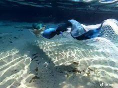 Mermaid Videos, Mermaid Gifs, Mermaid Man, H2o Mermaids, Fantasy Mermaids, Mermaids And Mermen, Mermaid Poems, Mermaid Tails For Sale, Realistic Mermaid