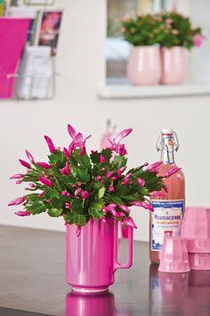 Piante Da Appartamento Con Fiore Rosa.242 Fantastiche Immagini Su Fiori E Piante Nel 2020 Fiori