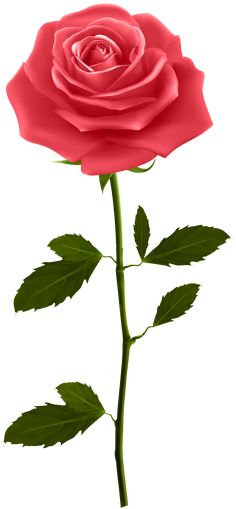 Red rose with stem png clip art gallery yopriceville high quality images