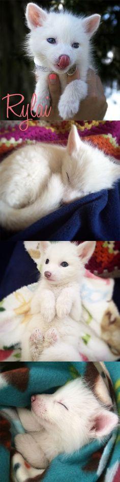 Rylai the fox <3