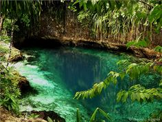 This is the stunning Hinatuan Enchanted River found in the island of Mindanao Oh The Places You'll Go, Places To Visit, Enchanted River, Tropical Paradise, Tropical Pool, Beautiful Places, Peaceful Places, Beautiful Forest, Around The Worlds