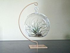 Hanging Glass Globe Air Plant Terrarium With Gold Painted Stand / Hanging Glass…