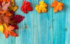 Обои осень, листья, клён, дерево