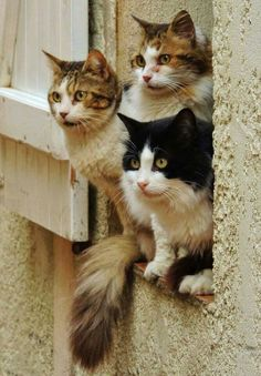 Cats in the window... Love ❤️