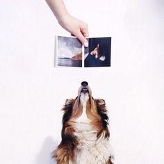 #dog #book #diy #fastbook ig user milmii