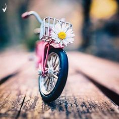 Mi Wallpaper, Love Wallpaper Backgrounds, Nature Iphone Wallpaper, Flower Wallpaper, Phone Backgrounds, Miniature Photography, Cute Photography, Cute Cartoon Pictures, Cute Love Cartoons