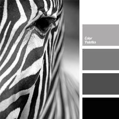 Monochrome color palette of gray shades is harmoniously complemented by black and white colors. Black-and-white photographs, reproductions and prints will naturally complement the interior of a study, a reception room, a hall or a living room. This palette is perfect for casual and business wardrobe.
