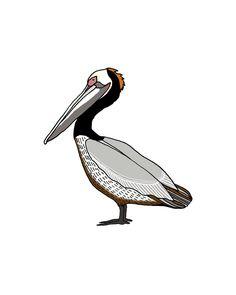 Pelican Art. Giclee print. 8x10 bird print. $25.00, via Etsy.