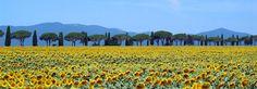 Die schönsten Orte der Toskana ein Leitfaden für die Maremma