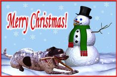 The 50 Best Dog Holiday Card Ideas - Fidose of Reality