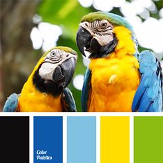 The combination of bright shades of yellow, blue and green is complemented with black color. This scheme suits well festive decoration of rooms and will look organically in summer vacation clothes, both female and male.