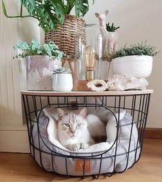 ✔ 10 Top kreative DIY-Korb für Katze zu Ihnen na&; Dog Organization, Cat House Diy, Cat Room, Pet Furniture, Furniture Design, Farmhouse Decor, Modern Farmhouse, French Farmhouse, City Farmhouse