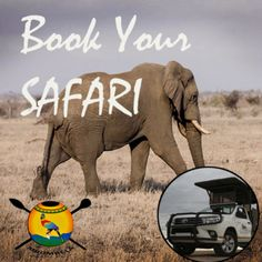 Visit Kruger National Park South Africa.  Stay in Nelspruit and go on a safari to kruger National Park. Find out how.  How to book a safari from Nelspruit to Kruger National Park, booking a safari, how to book a safari, safari from nelspruit to Kruger National Park, Booking a safari to Kruger National Park Kruger National Park Safari, National Parks, Biomes, African Safari, Ecology, South Africa, Trip Advisor, Elephant, To Go